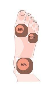 •50% appoggio posteriore (calcagno); •35 appoggio antero-interno (1° metatarso); •15% appoggio antero-esterno (5° metatarso).