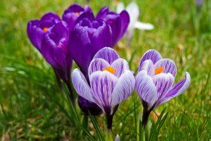 fiore della conoscenza