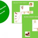 Riflesso Viscero-Somatico e Somato-Viscerale